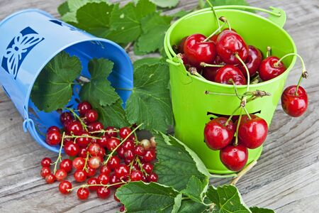 Cherries and currants in small buckets directly after harvest