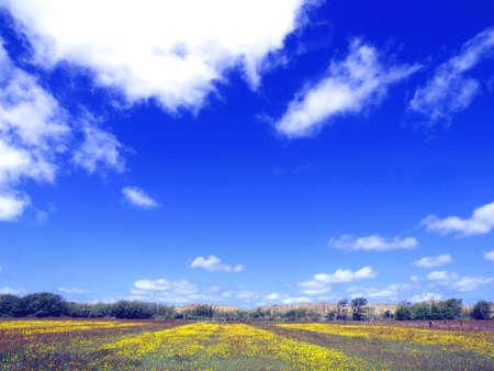 flowered: Flowered fields under blue sky Stock Photo