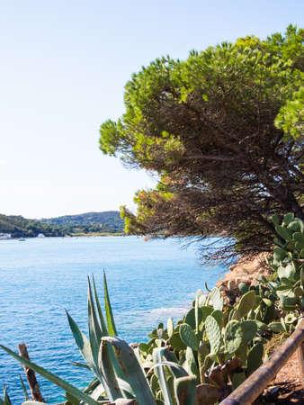 Fichi d'india picco sul mare blu dell'Arcipelago Toscano - Porto Azzurro Archivio Fotografico - 71794798