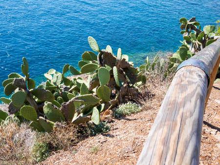 Fichi d'india picco sul mare blu dell'Arcipelago Toscano - Porto Azzurro Archivio Fotografico - 71794799