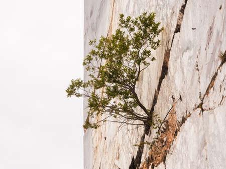 La forza di una pianta nata su una parete in marmo verticale Archivio Fotografico - 82097017