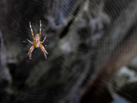 Spider and its spider web waiting for a prey Archivio Fotografico