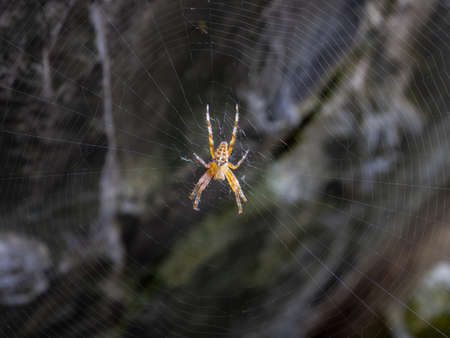 Spider and its spider web waiting for a prey Archivio Fotografico - 107336189