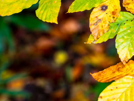 Frame composed of leaves with warm colors of autumn Archivio Fotografico - 131781572