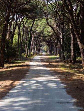 Dirt pathway in a Mediterranean pine forest Archivio Fotografico - 131781389