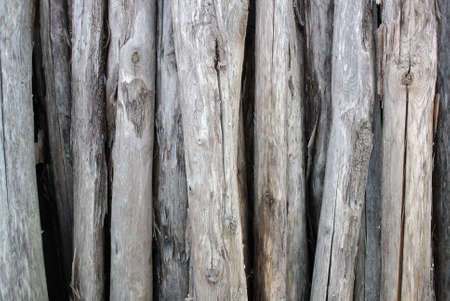 gathering of firewood dry and cracked
