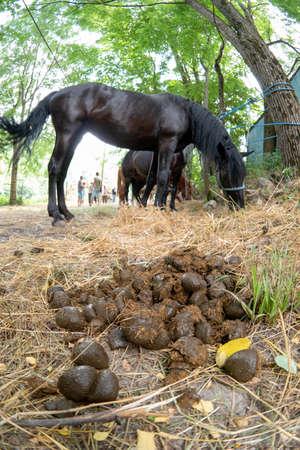 Horse droppings are excellent fertilizer