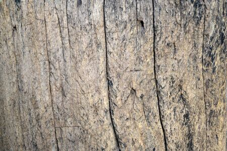 Background texture of an old wood panel composed of boards or planks for a vintage or rustic themed concept. Zdjęcie Seryjne