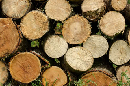 sawn: sawn wood piled perfectly as backround Stock Photo