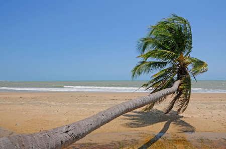 sloping: sloping palm at beach