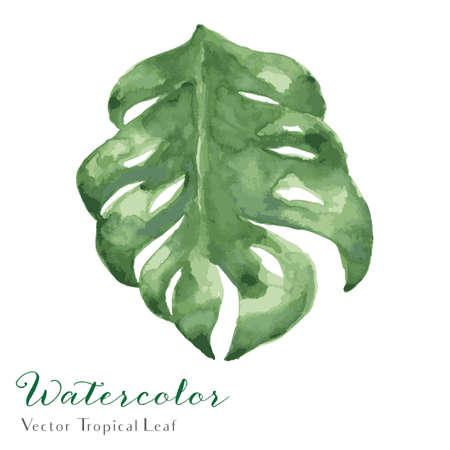 Watercolor Tropical Monstera Leaf - Vector Watercolor Tropical Leaf Illustration.