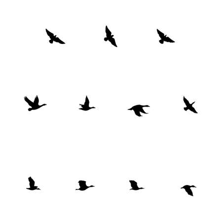 Flying Birds; Silhouettes of flying birds - ducks and geese.