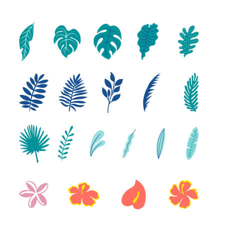 Tropical Botanical Illustrations - Colorful tropical vector illustrations.