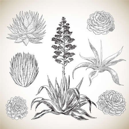Vintage Hand Drawn Succulents Set - Collection of various succulents, hand drawn in a vintage style.