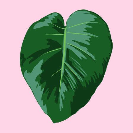 Tropical Monstera deliciosa leaf  イラスト・ベクター素材