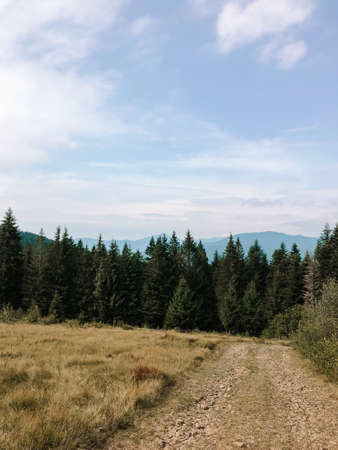 Picturesque landscape with fir forest in The Carpathians, Ukraine