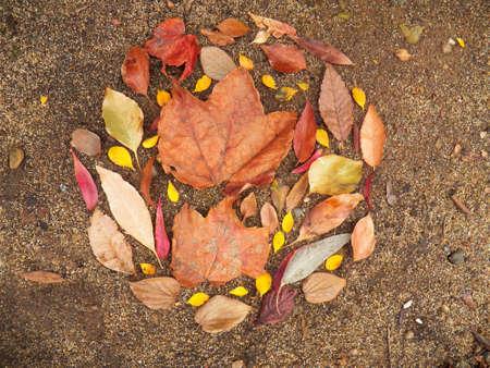 小さな葉に囲まれた日陰の葉 写真素材
