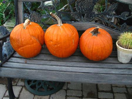 pumpkins on bench in yard Banco de Imagens