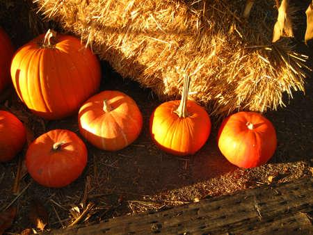 sunlit pumpkins with hay bales
