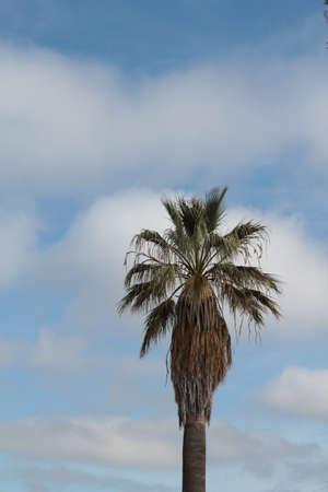 palm tree against cloudy sky Banco de Imagens