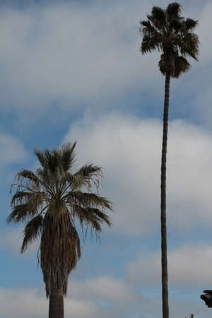 two palm trees against cloudy blue sky