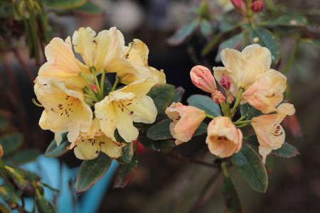 close up of pale flower cluster Banco de Imagens