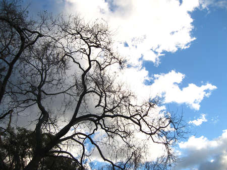 tree against clouds and blue sky