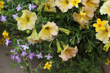 detail of yellow flowered plant Banco de Imagens