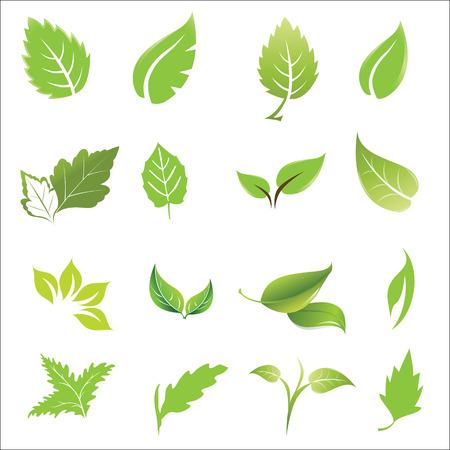 green leaves design elements icon set vector illustration.