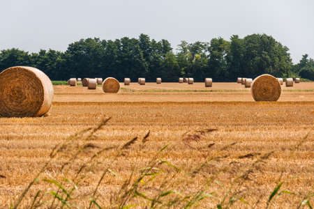 hayroll: Hay bales in the fields - Countryside  in Po valley