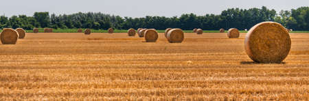 hayroll: Hay bales in the fields - Countryside in the Po valley Stock Photo