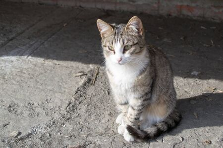 bask: Homeless cats came to bask in the sun