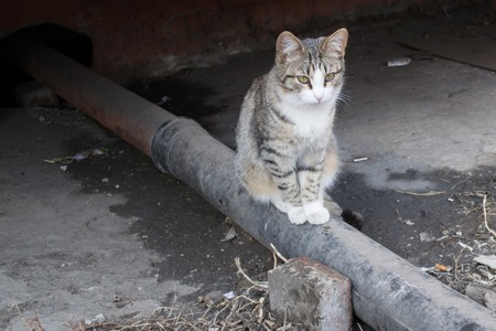 Homeless cats came to bask in the sun