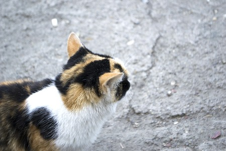 The homeless cat saw the dog. Imagens