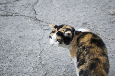 The homeless cat saw the dog.