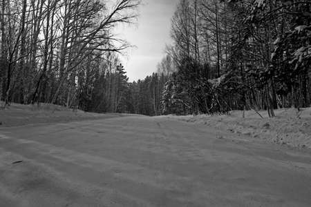 winter, road in the woods. Black and white photo