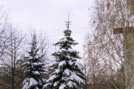 Snow-strewn tree in the beginning of winter