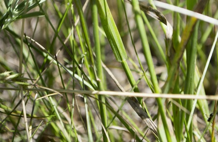 Green grass on a forest glade close-up