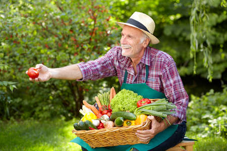 presenting: Senior gardener is presenting a basket with vegetables Stock Photo