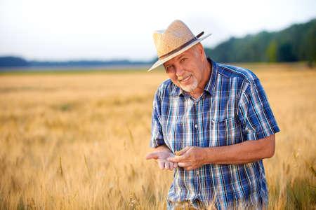 wheatfield: Smiling senior farmer checks wheat grain in the field Stock Photo