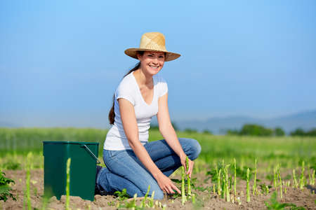 women in jeans: 20s woman at harvest of green asparagus Stock Photo