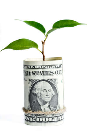 growing business: Composition from a money and plant symbolizes growing business and wealth