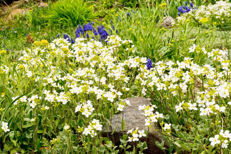flowerbed: Beautiful flower-bed of spring flowers Stock Photo