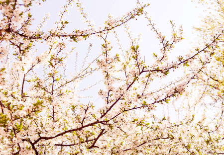symbolize: The flowering trees symbolize renewal of spring.  Stock Photo