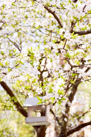 hanami: The flowering trees symbolize renewal of spring. The tradition of hanami - is a Japanese custom of picnicking under a blooming tree.