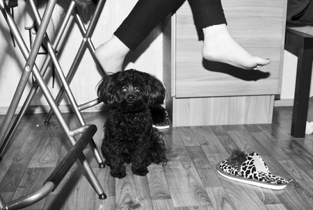 cosiness: Casual evening at home with pet Stock Photo