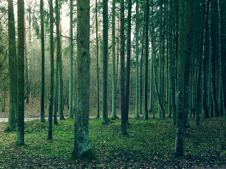 Twilight in a forest Imagens