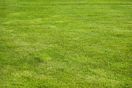 인공 잔디 - 녹색 잔디 배경 (질감)