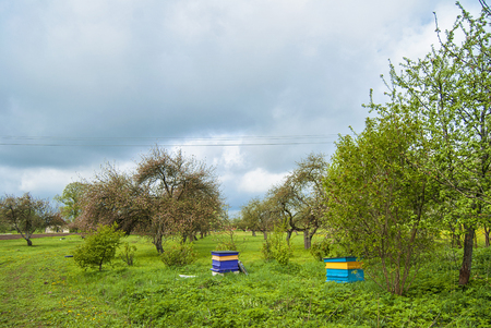 Bee hive stands in country side orchard in Latvia