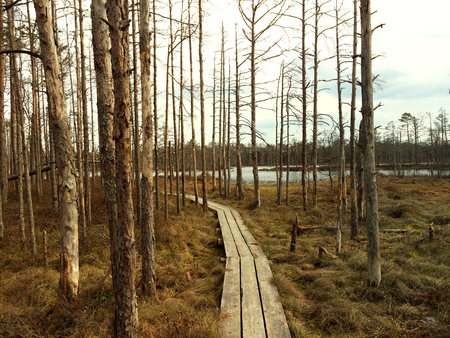 Wooden path in the most popular swamp in Latvia - Cenas tirelis
